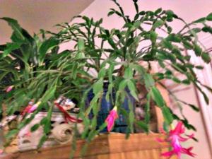 cacti-2011-03-20f