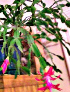 cacti-2011-03-20ma
