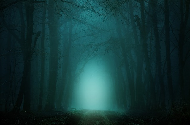 forest-4099730_640